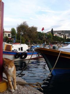 Port kitty in Dikili, Turkey