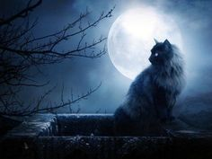 """It's a full moon tonight! """"Full Hunter's Moon or Full Harvest Moon – October This full Moon is often referred to as the Full Hunter's Moo. Screen Print Poster, Poster Prints, Bastet, Deep Books, Scary Cat, Photo Chat, 7 Chakras, Mystique, Cat Wallpaper"""