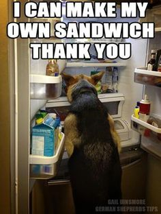 I can make my own sandwich thank you. http://www.sweetshepherdrescue.com.au/