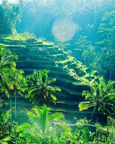 Hotels-live.com/cartes-virtuelles #MGWV #F4F #RT Tegallalang Rice Terraces - Famous for it's #amazing & #beautiful sunrise scenes of rice paddies #Ubud #Bali #indonesia  ___ #travellersplanet #travellersplanetbali by travellersplanet https://www.instagram.com/p/BEoX5KdKLNA/