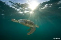 It's World Turtle Day. One thing we share in common with our turtle pals: We both need a healthy ocean!