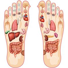 mprove Your Sleep With This Foot Massage . It is recommended to massage your feet nightly before you go to bed. we will strengthen our immune system. Massage For Men, Foot Massage, Gm Diet Plans, Body Map, Foot Reflexology, Pound Of Fat, Salud Natural, Massage Benefits, Massage Techniques