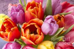 Spring Tulips by Cindi Ressler Floral Photography, Nature Photography, Tulip Bouquet, House Warming, Tulips, Fine Art America, Fine Art Prints, Art Floral, Spring