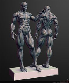 anatomy_pose zbrush