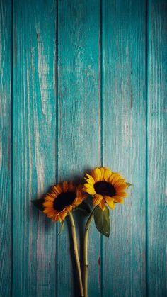 Frühling Wallpaper, Flower Background Wallpaper, Flower Phone Wallpaper, Tumblr Wallpaper, Cute Wallpaper Backgrounds, Cellphone Wallpaper, Flower Backgrounds, Pretty Wallpapers, Colorful Wallpaper