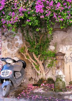 Rome street scene...Vespa, flowers and graffitied water fountain