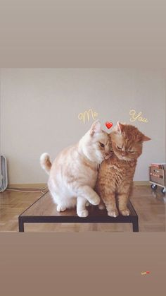 Cute funny animals wallpaper Ideas for 2020 Cute Cats And Kittens, I Love Cats, Crazy Cats, Kittens Cutest, Cute Funny Animals, Cute Baby Animals, Pretty Cats, Beautiful Cats, Animals Beautiful