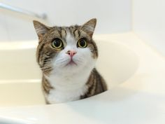We all know cats can have difficult personalities, but so many of them can be so loving and expressive. Just look at the trust and love in this little face. It looks nothing like my cat, but the emotion in that little face looks just like what I see in my cat all the time.