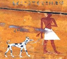 http://looking-for-mabel.webs.com/009%2009%20SEP%20PIXS/Egyptian%20dog.jpg