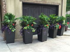 Tropical Backyard Landscaping, Landscaping Around Pool, Tropical Garden, Palm Garden, Planters Around Pool, Outdoor Planters, Pool Plants, Backyard Plants, Potted Palms