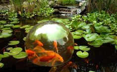 """It's called an """"Add-A-Sphere"""" and start at around $70, but you could create a unique one for nothing out of recycled materials.    If you need inspiration for what you could use - an old glass vase, fish tank, fish bowl, glass jar - basically anything that is water/air tight (and it doesn't have to be spherical). Then either make some """"legs"""" or support it on rocks or old timber so the fish can swim in and out."""