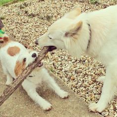 """""""Sharing is caring"""" doesn't apply to these two, as far as Ginny's concerned she saw the stick first so therefor it's hers... Missi seems to think the same way too. - @ginny_jrt- #webstagram"""