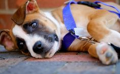 """Rescue Mission """"Cold Patrols"""" Make Sure Homeless Pets Have A Warm Place To Sleep"""