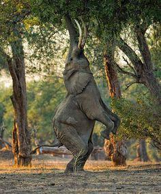 Elephant Ballet