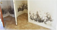 How to Combat Mold in a Flooded House Before you rebuild or restore your water-damaged home, take these steps to keep mold at bay by Gold Coast Flood Restorations Diy Mold Remover, Mold Removal, Home Renovation, Flood Restoration, Flooded House, Get Rid Of Mold, Remove Mold, Carpet Stairs, Diy Molding