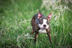 Pet Portraiture by Brian Pasko Photography, serving the Portland Oregon Metropolitan Area and beyond.