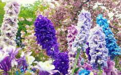 Perennials are the anchor of any fall garden. Make the most of your garden sightseeing, with these beautiful flowers. http://gardenseason.com/secret-garden-perennial-flowers/