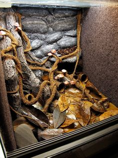 nice vine-especially where it adheres to curves/ledges, but rocks are atrocious (doesn't bother the animal). Are mushrooms added? Reptile Habitat, Reptile Room, Reptile Cage, Reptile Enclosure, Decor Terrarium, Lizard Terrarium, Lizard Cage, Classroom Pets, Bearded Dragon Habitat