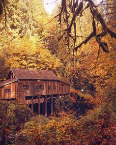 Rachel Robert decided to visit the Cedar Creek Mill in Woodland, Wash., before autumn ended and captured this shot with her iPhone Rachel Robert, Your Take Rachel Roberts, Water Mill, Cedar Creek, Old Buildings, You Take, Covered Bridges, Fall Photos, Fall Pumpkins, Barns