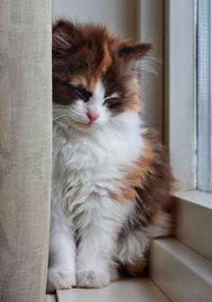 Sleepy kitten byJane Bjerkli