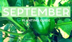 Your September edible planting guide is here! From leafy greens to cucumbers to zucchini - check out what you can grow this month! VIC, NSW, QLD, SA, WA, NT & TAS! Get on it!