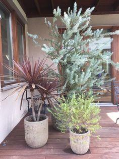 Natural Garden, Display Design, Balcony Garden, Green Flowers, Gift Packaging, Cactus Plants, Interior Architecture, Entrance, Garden Design