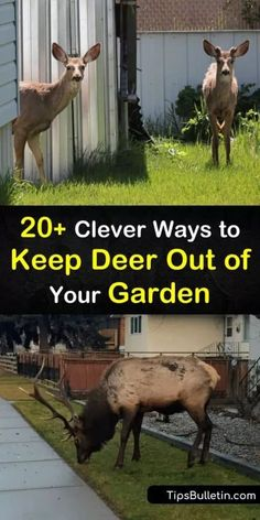 20+ Clever Ways to Keep Deer Out of Your Garden