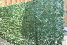 Outdoor Ivy fence covering is one artificial plant that is affordable and is designed with UV resistant resins to reflect the harsh rays of the sun. Available at Geranium Street Floral, these outdoor ivy rolls are great for privacy screen or just to section of an area to keep you favorite pet shaded in.