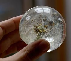 Dandelion paperweight make a wish sculpture eco resin