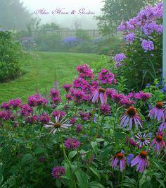 coneflowers, prune mélisse et phlox un matin brumeux.