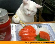 Gato comiendo sushi.