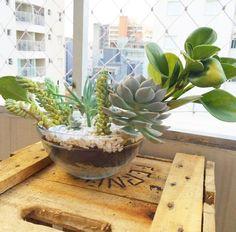Bom dia do nosso querido vaso Gilberto  #oitominhocas #suculentas #suculovers #decoração #plantinhas #elo7br