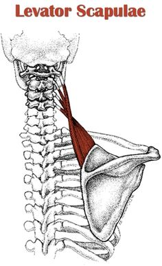 48 best stiff neck images  stiff neck neck problems