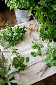 Herbs by Green Cookies
