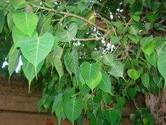 http://vedicremediesin.blogspot.ae/2014/04/hindu-sampradaya.html