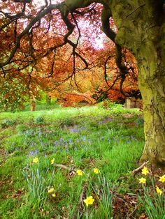 by Anna Urban  Leeds,West Yorkshire, England
