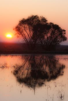 ᎦųŋʀįᎦᏋ αŋɖ ᎦųŋᏕᏋɬ (Sunset at Merced Wildlife Refuge par David Schroeder)