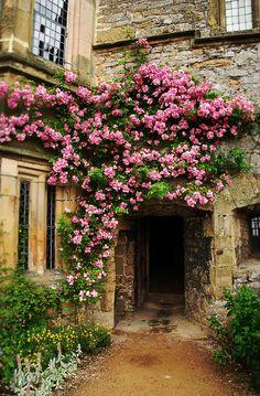 Roses, Haddon Hall, Derbyshire, England