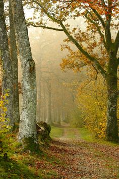 Track in a misty autumn forest (Pays de la Loire, France) by Anne