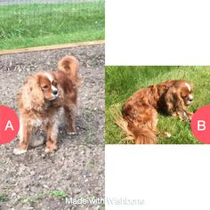 Which pic is cuter? Click here to vote @ http://wishbone.io/which-pic-is-cuter-36098551.html?utm_source=app&utm_campign=share&utm_medium=referral