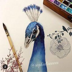 #mulpix  #lindo  #pavão pintado em  #aquarela por @sophialiuuuuu   #beautiful  #watercolor  #peacock by  #sophialiuuuuu   #natureza  #animal  #ave  #desenho  #pintura  #nature  #bird  #drawing  #painting  #tumblr  #tumblrbrasil  #blog  #julianapsicologa  #arte  #art  #personalidarte  #fotografia