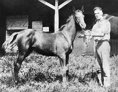 Man o' War as a foal in 1917 ♥ One of my all time fave race horses. I don't know why, but I read a book on him over and over as a kid.