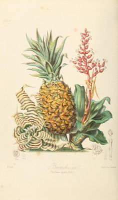 2 - Illustrations of the natural orders of plants with groups and descriptions. - Biodiversity Heritage Library