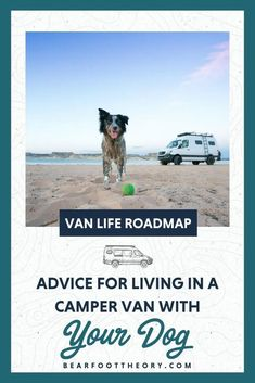 Van life with pets can be an amazing experience. But there are a few safety and other considerations to take when bringing a pet on the road.