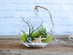 Amazing Hanging Air Plants Decor Ideas 50