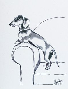Dachshund Clube - April Sage