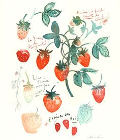 via Creature Comforts #watercolor #strawberry #fraises