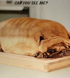 A Pug Loaf - Funny pictures and memes of dogs doing and implying things. If you thought you couldn't possible love dogs anymore, this might prove you wrong. Funny Animal Jokes, Cute Funny Animals, Funny Dogs, Weird Dogs, Funniest Animals, Happy Animals, Amor Pug, Animal Pictures For Kids, Funny Animal Pictures