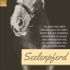Pferdesprüche&Pferdefutter-emma-pferdefuttershop.de (3)