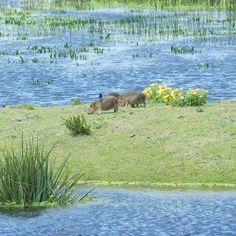 Estação Ecológica do Taim   14 lugares que vão te dar vontade de visitar o Rio Grande do Sul